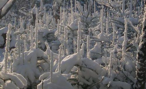 snowspires