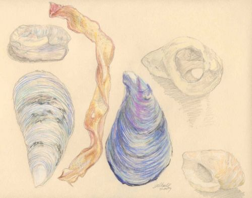 baccaroshells