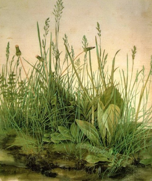 The Great Turf by Albrecht Durer