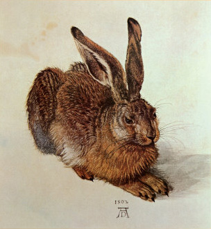 A Young Hare by Albrecht Durer 1502