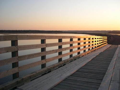 bridge-along-the-salt-marsh-trail