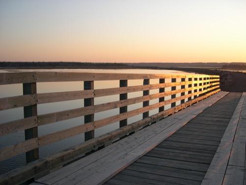 bridge-along-the-salt-marsh-trail