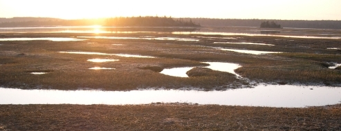 sun-rising-over-marsh-grass