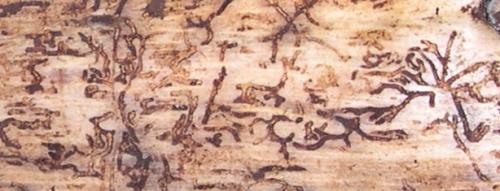 hieroglyphics2