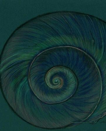 moonshell spiral