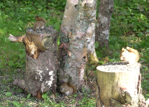squirrels eating