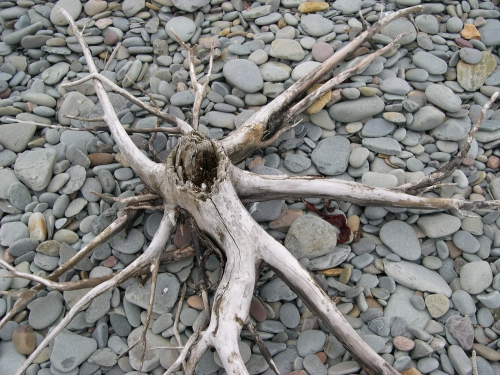 tree stump on beach