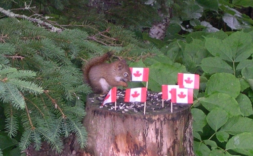 canada day squirrel