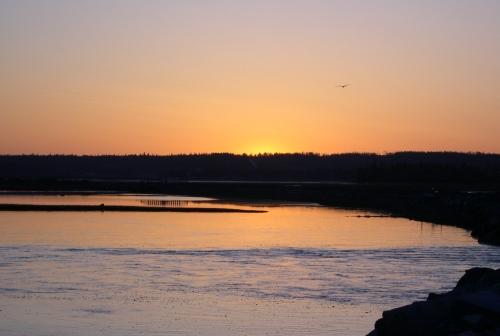 salt marsh at dawn