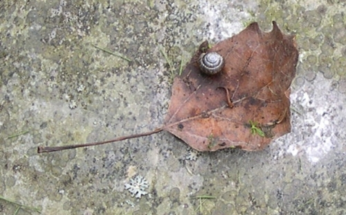 Garden Snail on Leaf on Stone (Earth)