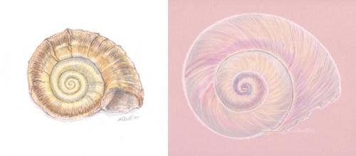 2 spirals