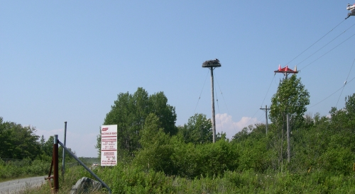 osprey nest at macdonalds beach