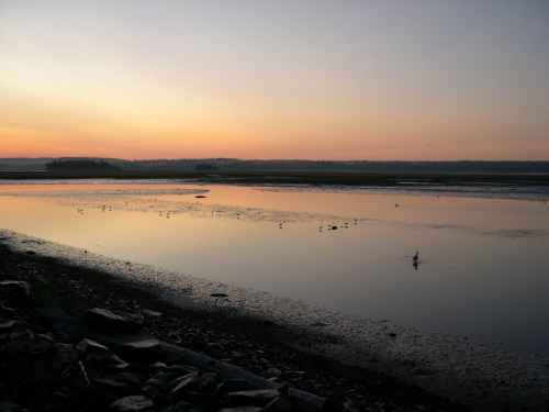 salt marsh just before dawn