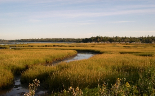 marsh in september