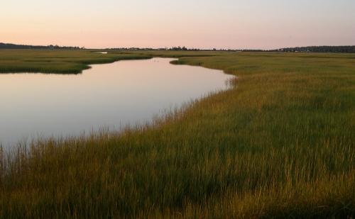 sept marsh grass