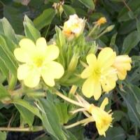 yellow small