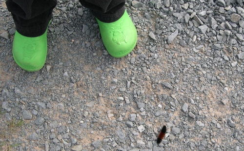 caterpillar traffic