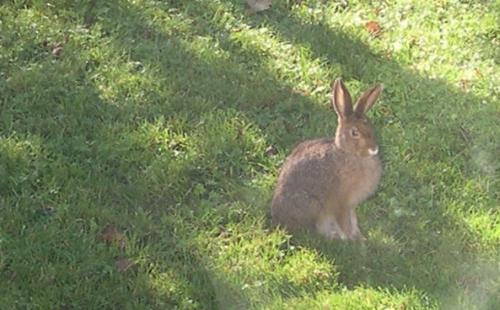 hare from window
