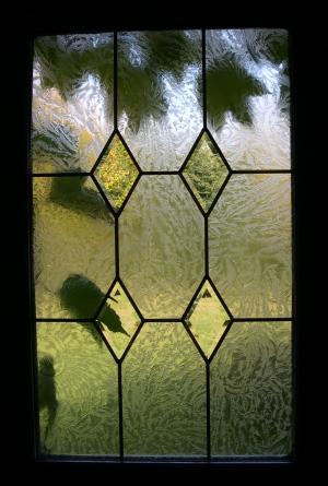 leaves through front door window