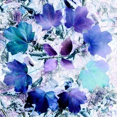 maple leaf mandala in blue