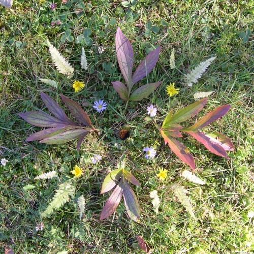 peony leaf mandala