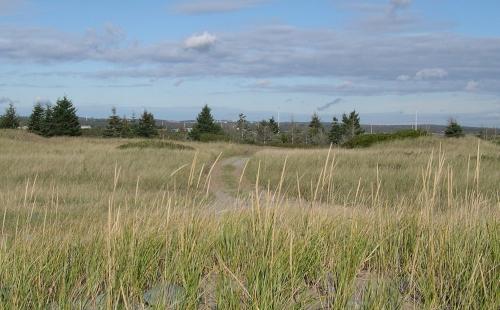 sand dune grasses