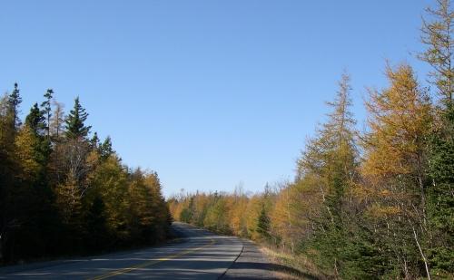 bissett road