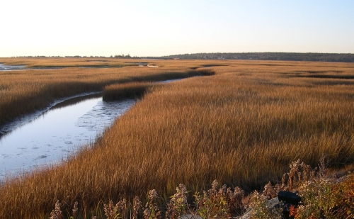 marsh grasss nov