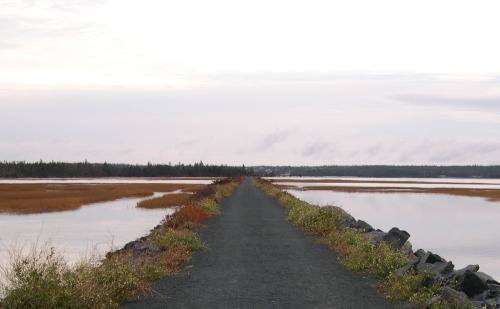 trail in november