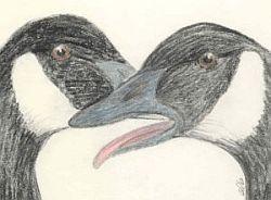 geese talking