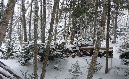 snow in woods