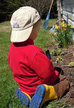 digging around the daffodils