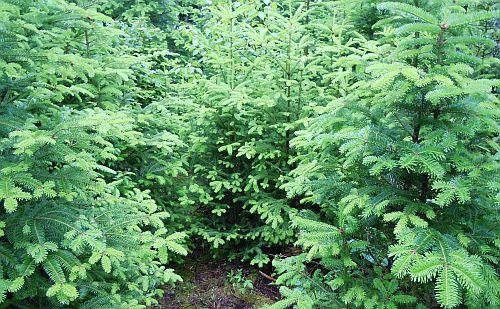 fresh green growth