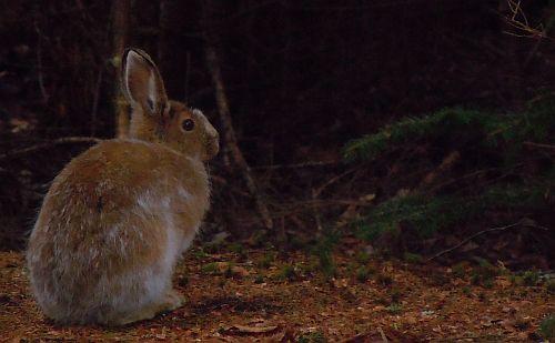 bunny thinking