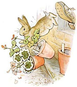 Peter Rabbit on the run