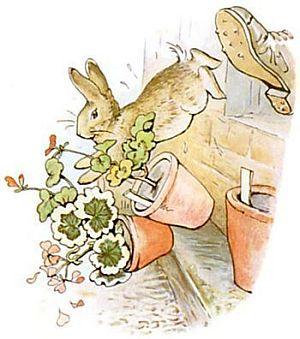 Peter Rabbit on the run