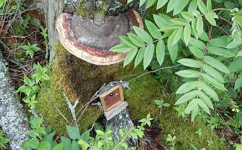 fungal awning above fairy tree door