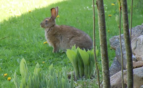 hare near front steps